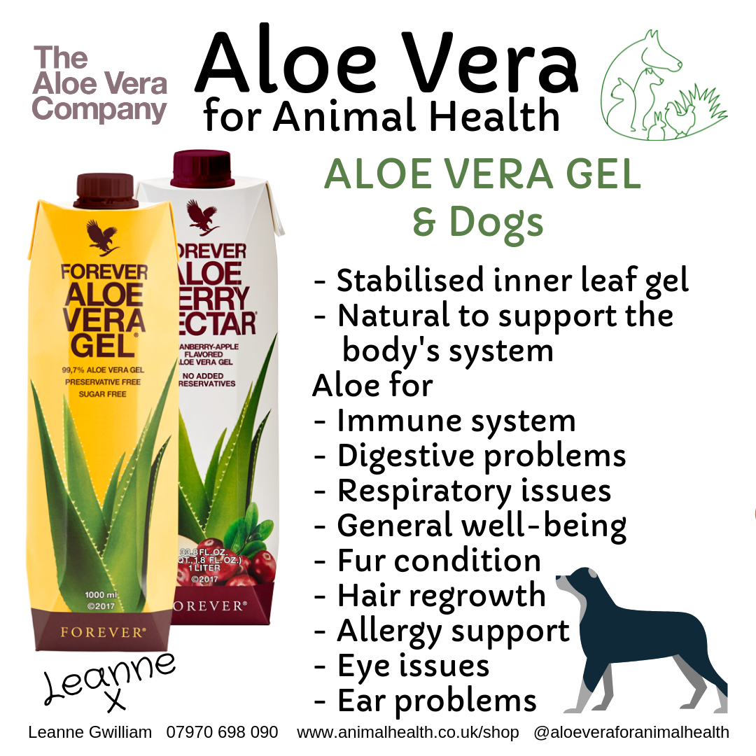 aloe_vera_for_dog_health_repair_wellness_digestion_skin.png